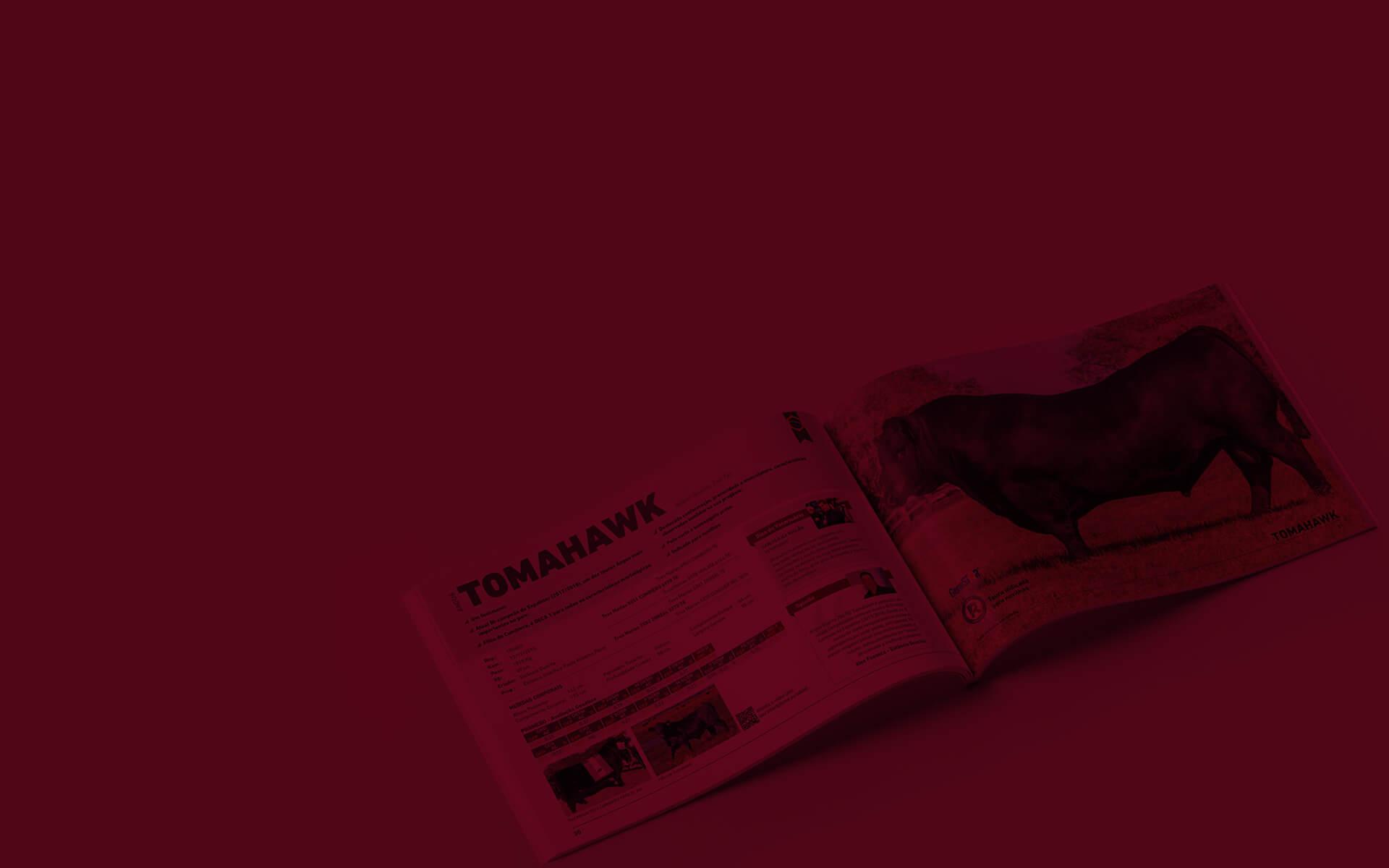 Criação de projeto gráfico de Catálogo de Touros